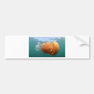 La méduse de baril nage avec le maquereau autocollant de voiture