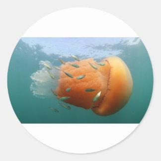 La méduse de baril nage avec le maquereau sticker rond