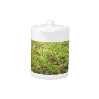 La mousse verte dans le détail de nature de la