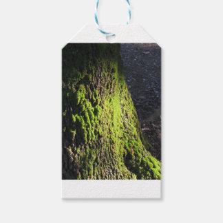 La mousse verte dans le détail de nature de la étiquettes-cadeau