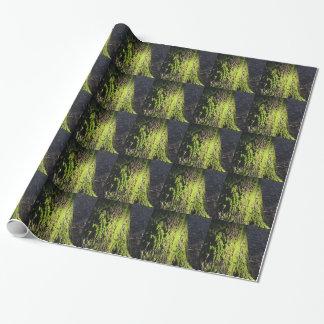 La mousse verte dans le détail de nature de la papier cadeau