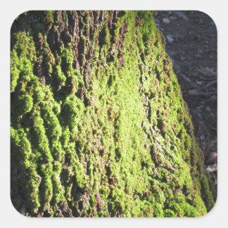 La mousse verte dans le détail de nature de la sticker carré