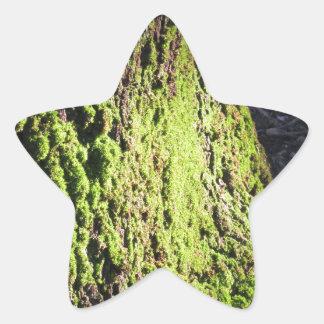 La mousse verte dans le détail de nature de la sticker étoile