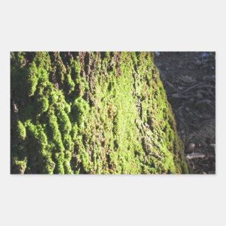 La mousse verte dans le détail de nature de la sticker rectangulaire