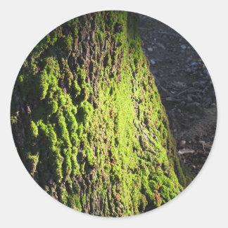 La mousse verte dans le détail de nature de la sticker rond