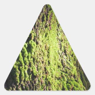 La mousse verte dans le détail de nature de la sticker triangulaire