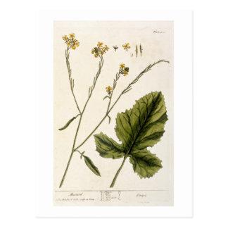 """La moutarde, plaquent 446 """"d'un de fines herbes carte postale"""