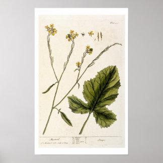 """La moutarde, plaquent 446 """"d'un de fines herbes cu posters"""