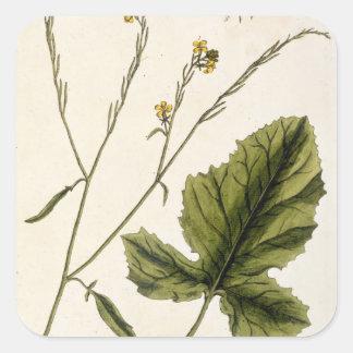 """La moutarde, plaquent 446 """"d'un de fines herbes sticker carré"""