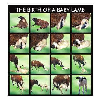 La naissance d'un agneau de bébé photos d'art