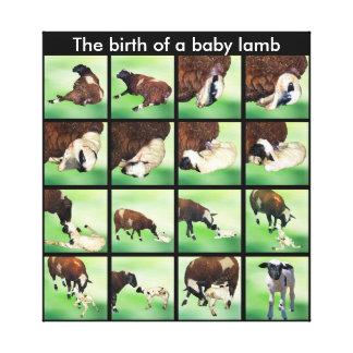 La naissance d'un agneau de bébé toile tendue sur châssis