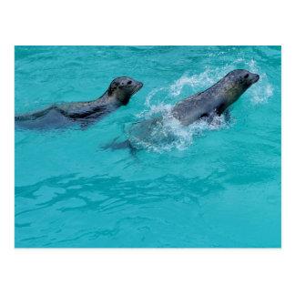 La natation douce scelle des couples carte postale