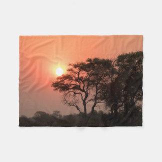 La nature d'arbres de coucher du soleil de couverture polaire