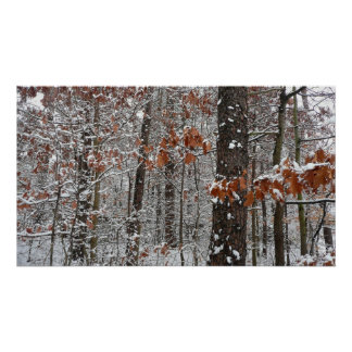La neige a couvert la photographie de nature poster