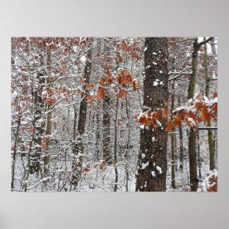 La neige a couvert la photographie de nature posters