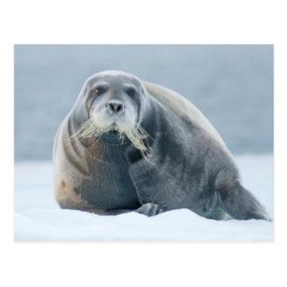 La Norvège, archipel du Svalbard, le Spitzberg 4 Carte Postale