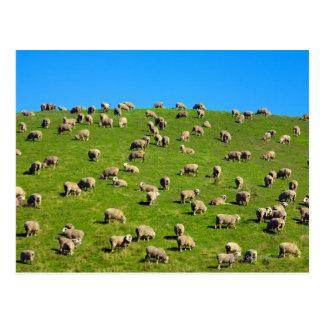 La Nouvelle Zélande, île du sud, Cantorbéry Cartes Postales