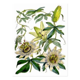 La passion fleurit l'illustration botanique carte postale