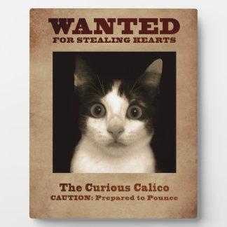 La plaque curieuse de chaton de calicot
