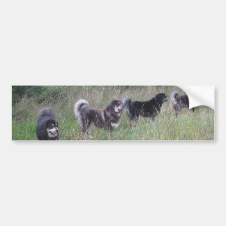 La promenade de mastiff tibétain ! autocollant pour voiture