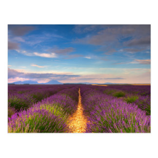 La Provence - la lavande met en place la carte