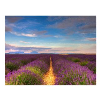La Provence - la lavande met en place la carte Carte Postale