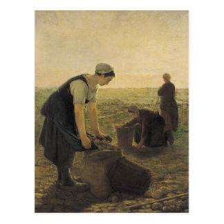 La récolte de pomme de terre carte postale
