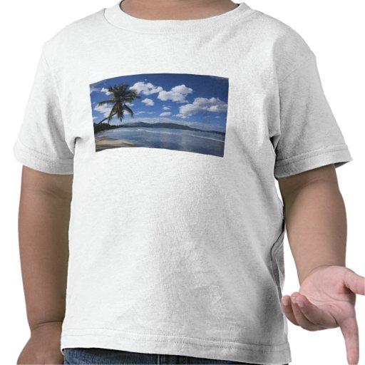 La République Dominicaine, péninsule de Samana, La T-shirt