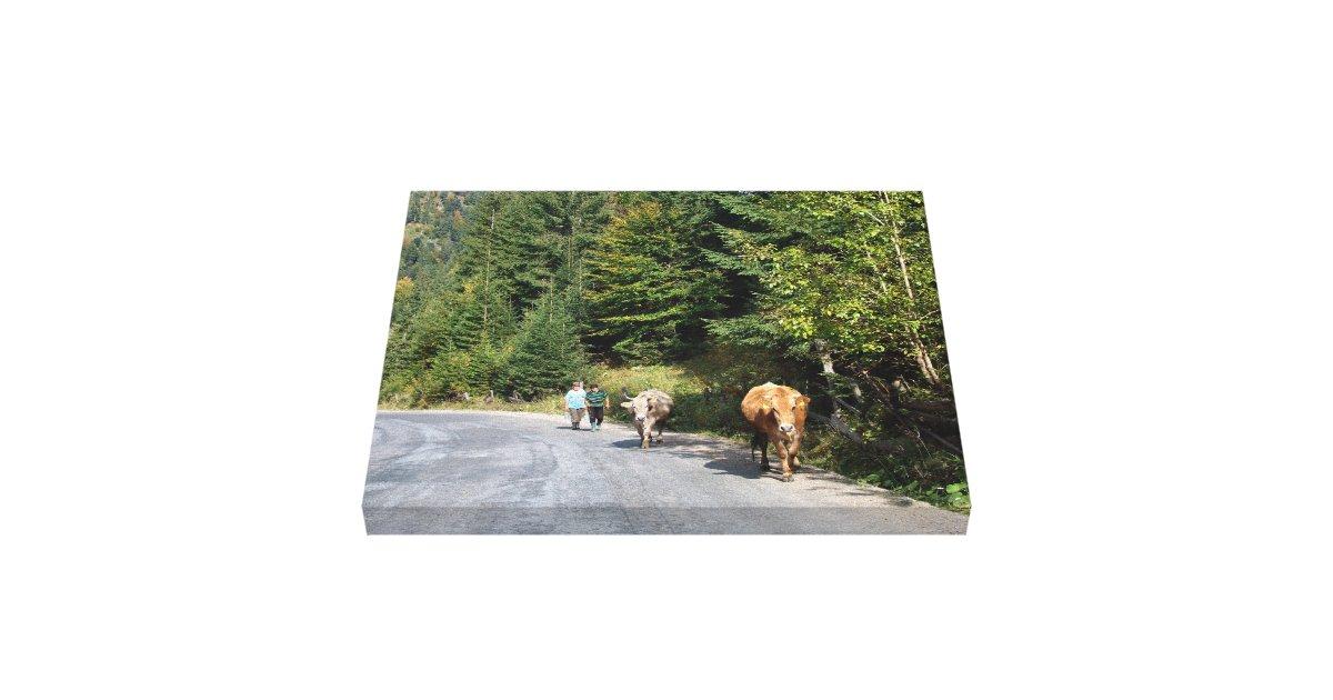 la roumanie marchant les vaches impression sur toile zazzle. Black Bedroom Furniture Sets. Home Design Ideas
