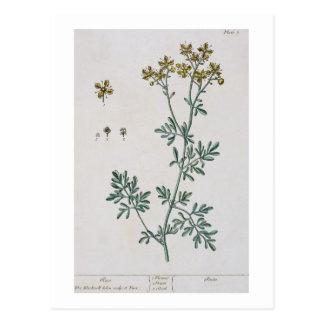 """La rue, plaquent 7 """"d'un de fines herbes curieux"""", carte postale"""