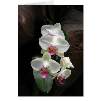 La sympathie assez blanche d'orchidées ou vous carte de vœux