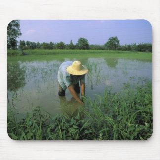 La Thaïlande, Sukhothai. Agriculteur de riz. M. Tapis De Souris