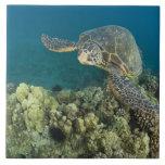 La tortue de mer verte, (des mydas de Chelonia), e Carreau