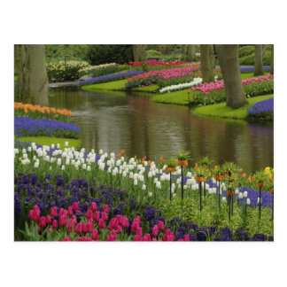 La tulipe et la jacinthe font du jardinage, les carte postale
