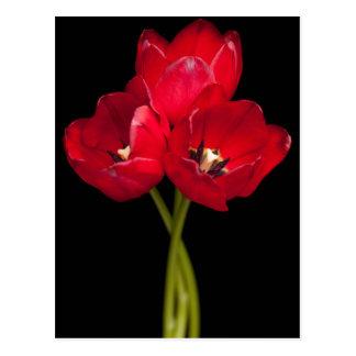 La tulipe rouge fleurit l'arrière - plan noir carte postale