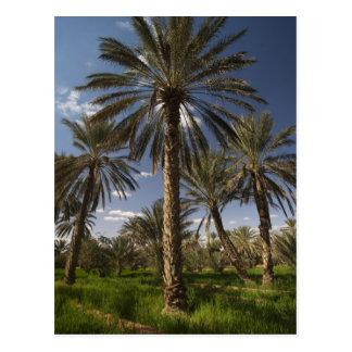 La Tunisie, région de Ksour, Ksar Ghilane, palmier Carte Postale