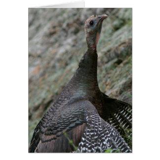 La Turquie sauvage, carte de voeux