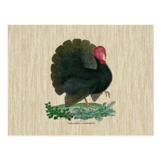 La Turquie vintage Cartes Postales
