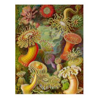 La vie d'océan d'Actinae d'Ernst Haeckel Carte Postale