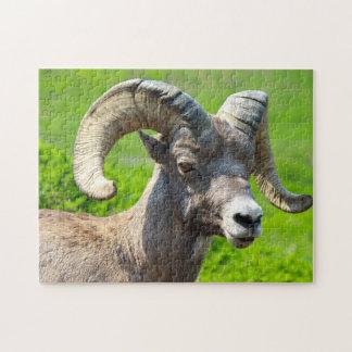 La vie sauvage Canada. Moutons de Big Horn Puzzle
