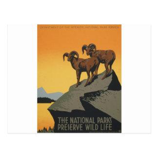 La vie sauvage de conserve de parcs nationaux carte postale
