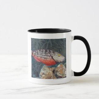 La vie sous-marine, POISSON : un feu d'arrêt Mug