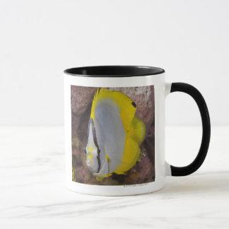 La vie sous-marine, POISSON :  Un tropical coloré Mug