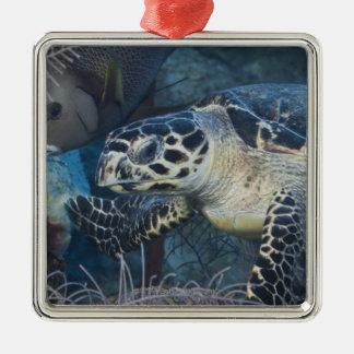 La vie sous-marine : Une tortue de mer de Ornement Carré Argenté