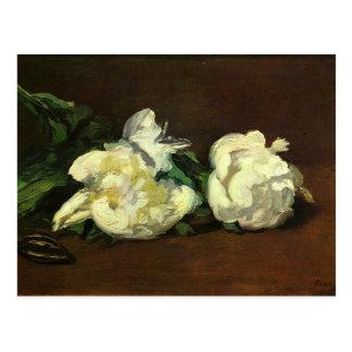 La vie toujours, pivoines blanches - Edouard Manet Carte Postale