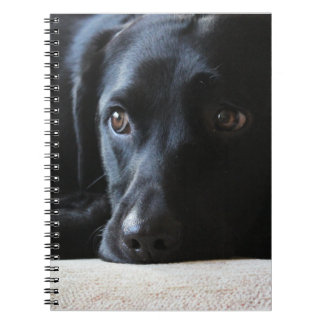 Labrador noir carnet