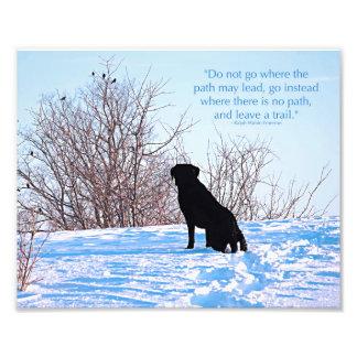 Labrador noir - citation de la vie de chemin photographies