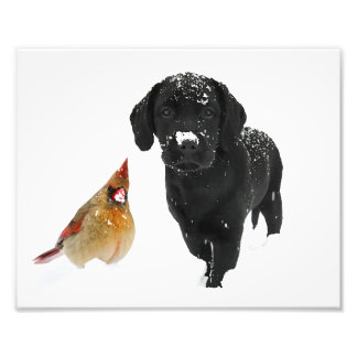 Labrador noir - compagnons de jour de neige impression photographique