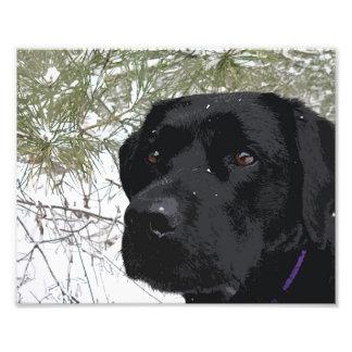 Labrador noir - pins de scintillement impressions photo