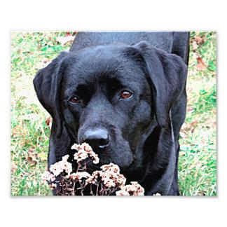 Labrador noir - prenez du temps photo d'art